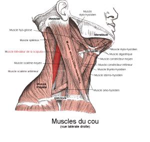 Neck Massage Tools
